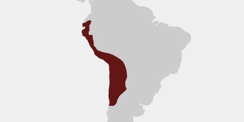 cultura inca imperio mapa