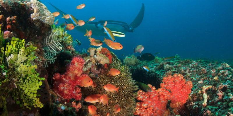 parque nacional de komodo arrecife de coral