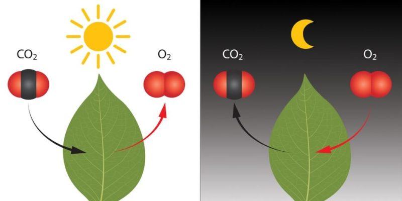 reaccion quimica naturaleza respiracion fotosintesis