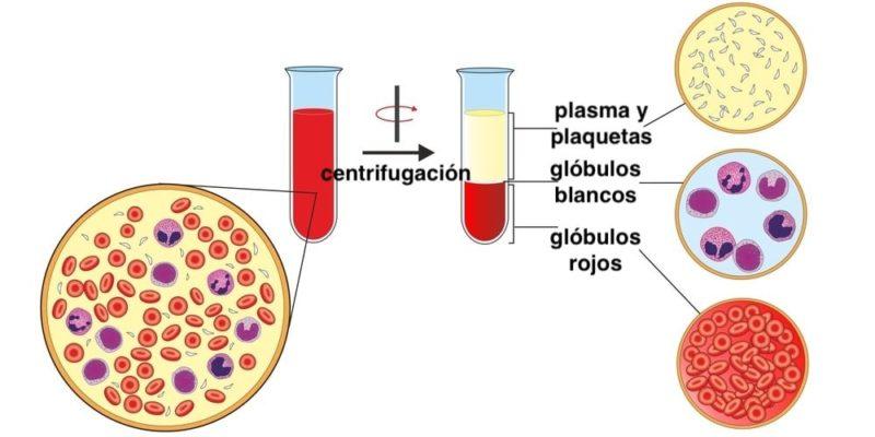 separacion de mezclas centrifugacion plaquetas sangre plasma