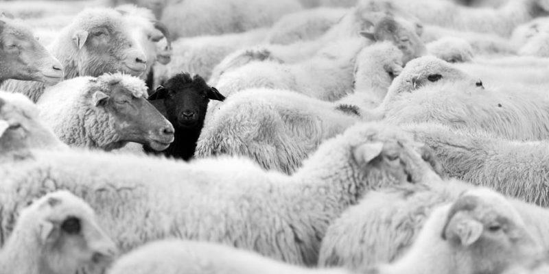analogia oveja negra