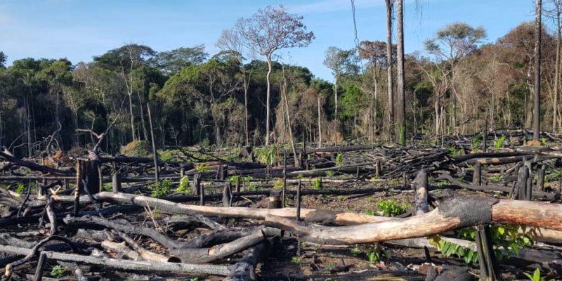 deforestacion amazonas brasil 2019 fuego