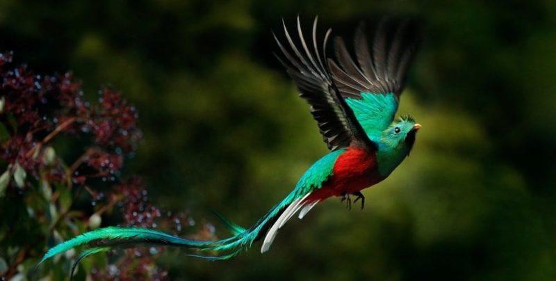 deforestacion consecuencias biodiversidad quetzal