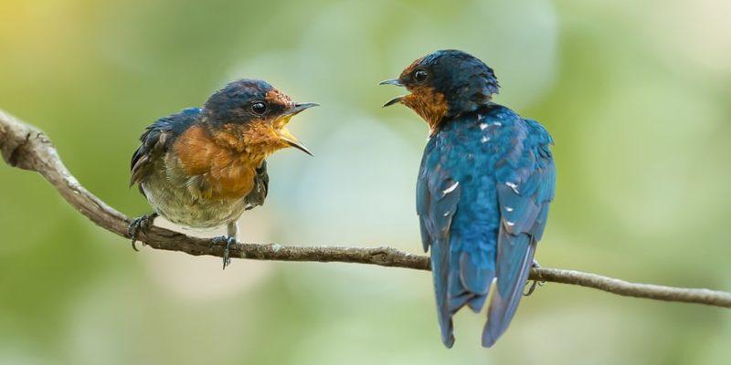 proceso comunicativo animales