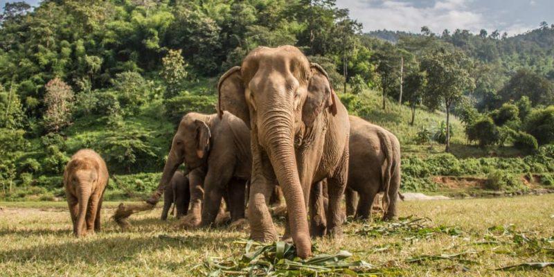 animales terrestres elefantes esqueleto