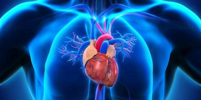 circulacion mayor y menor sangre cuerpo humano