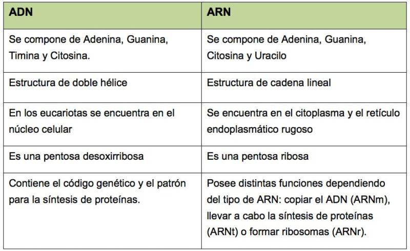 cuadro comparativo adn arn-ejemplo