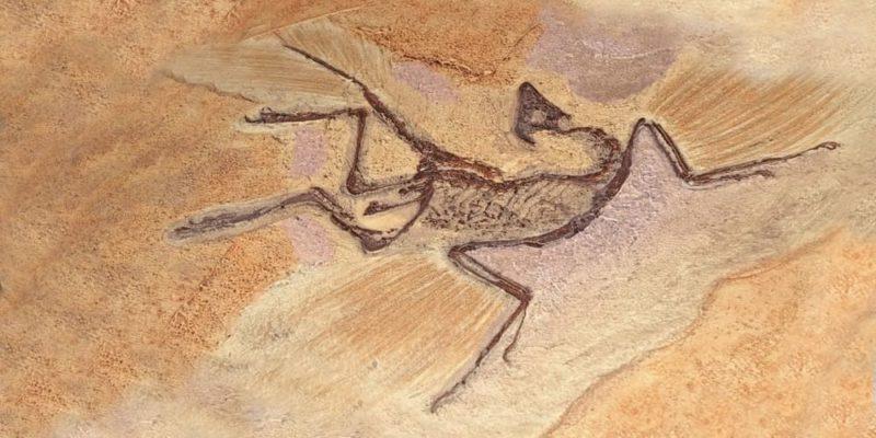 paleontologia archaeopteryx