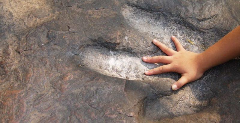 paleontologia huellas fosiles