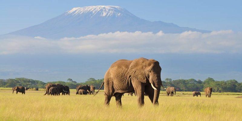 africa kilimanjaro elefante