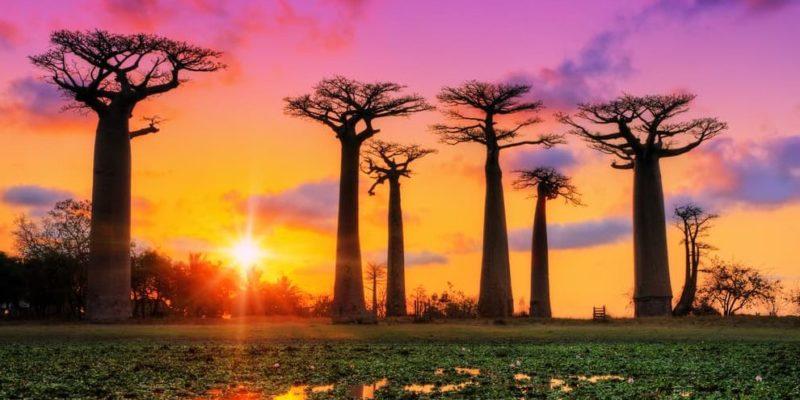 africa madagascar isla baobabs