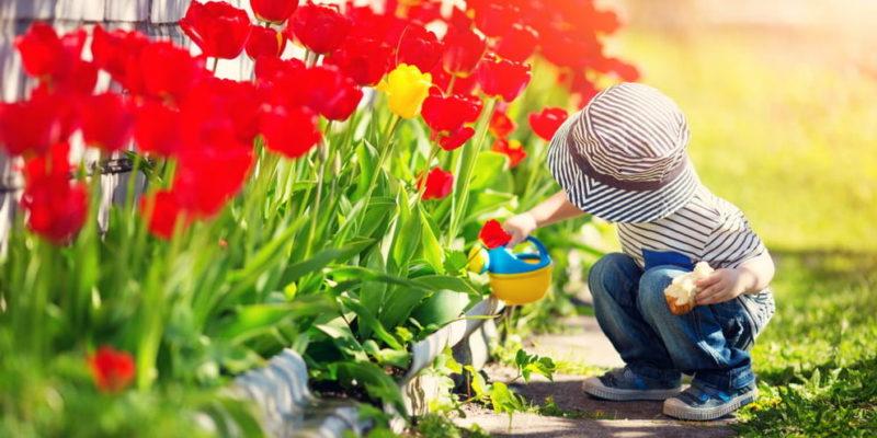 inteligencia naturalista jardineria