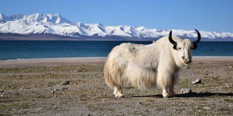 llanura meseta tibet lago namtso