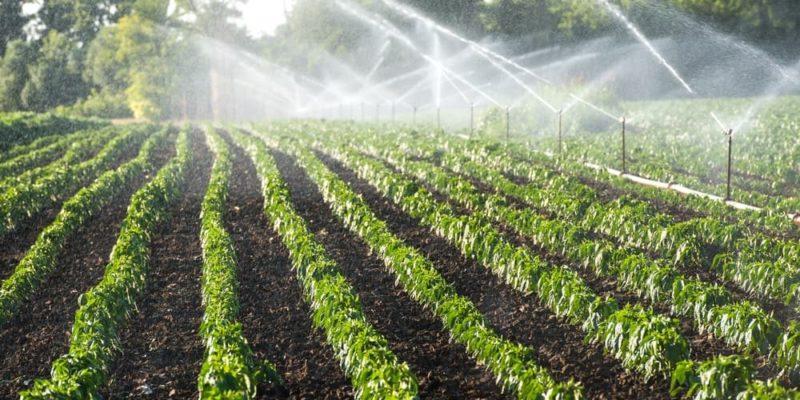 recursos hidricos importancia agricultura