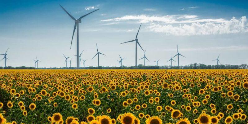 derecho ambiental importancia recursos naturales