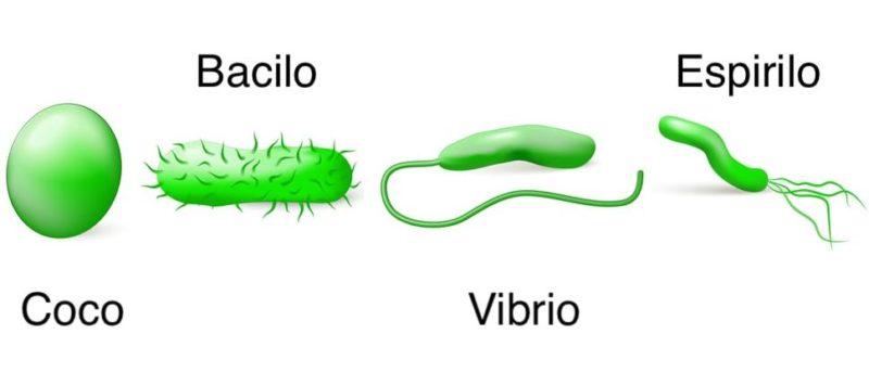 microbios bacterias