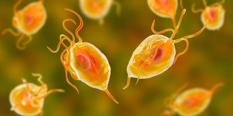 microbios protozoarios
