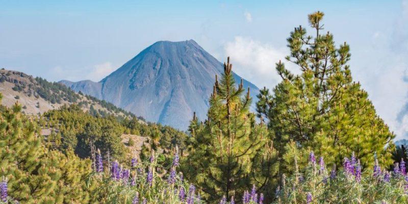 region natural bosque seco mexico