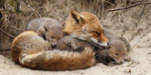 Reproducción en los animales