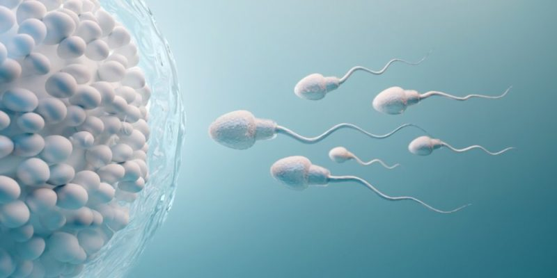 reproduccion sexual ovulo proceso fecundacion