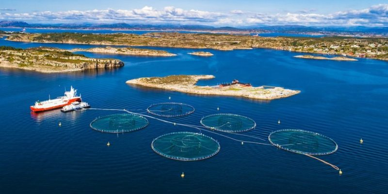 seleccion artificial desventajas salmon criadero