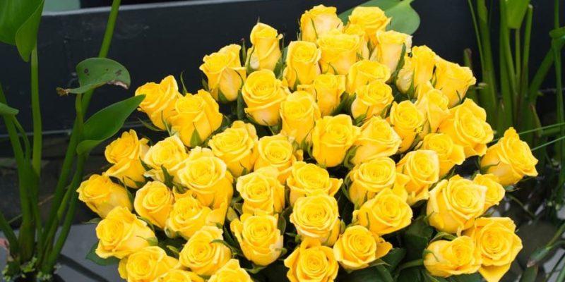 seleccion artificial flores