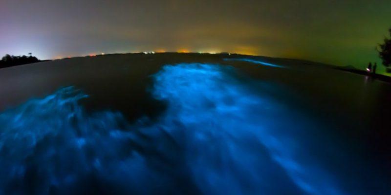biofisica bioluminiscencia