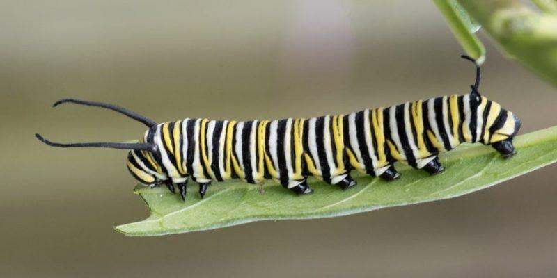 mariposa alimentacion