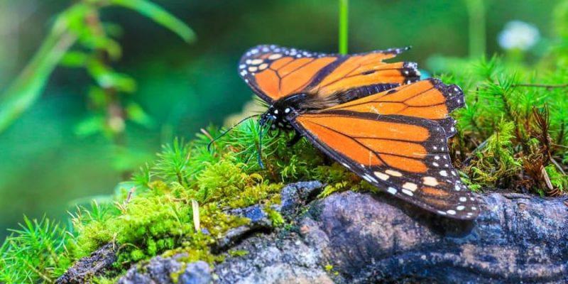 mariposa habitat