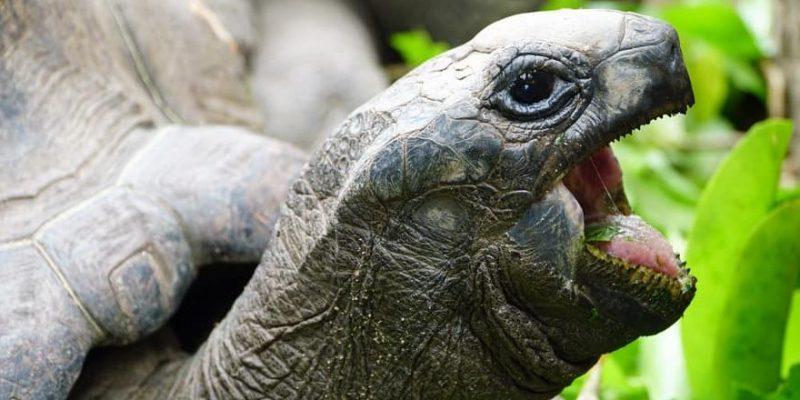 tortuga caracteristicas pico boca