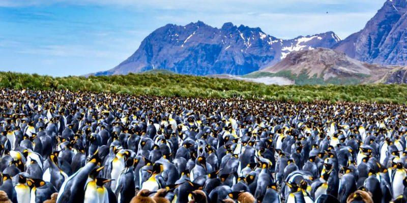 colonia biologia pinguinos