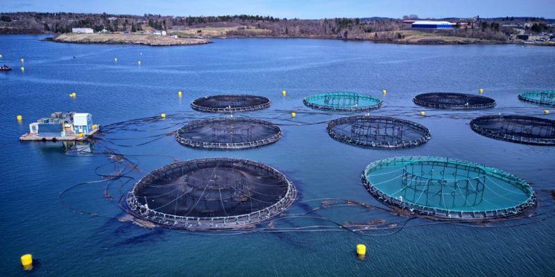 animales de granaja piscicultura