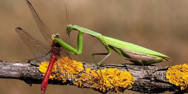 animales insectivoros artropodos