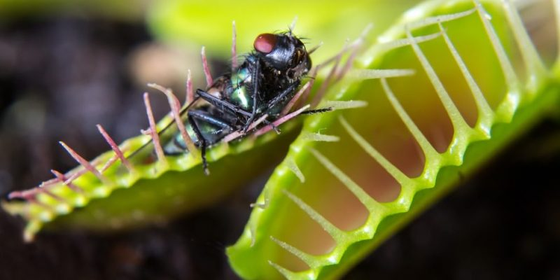 animales insectivoros plantas carnivoras