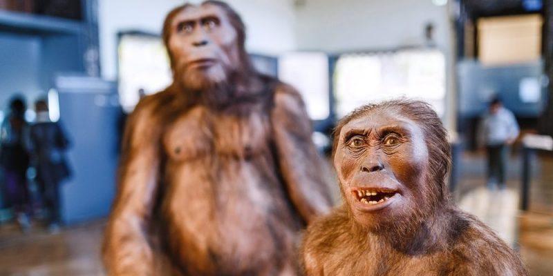 origen del ser humano evolucion