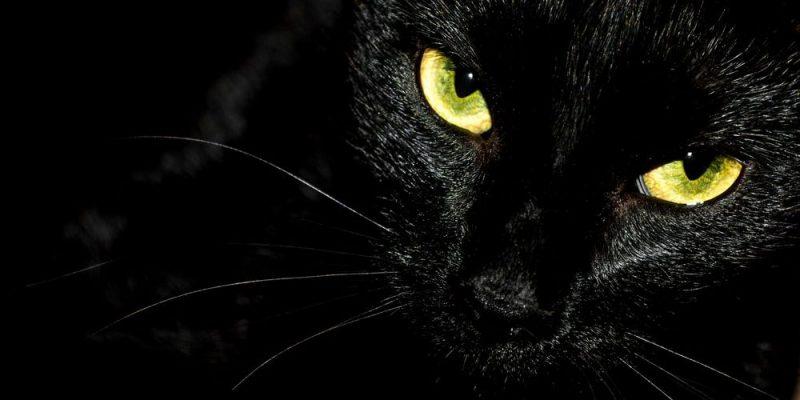 supersiticiones gato negro
