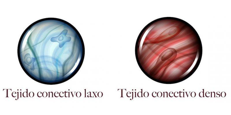tejidos del cuerpo conectivo