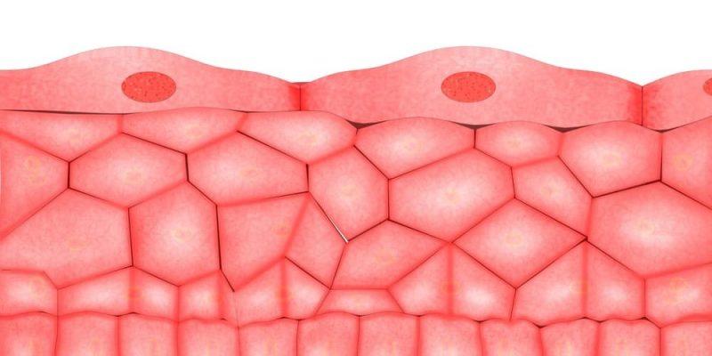 tejidos del cuerpo epitelial