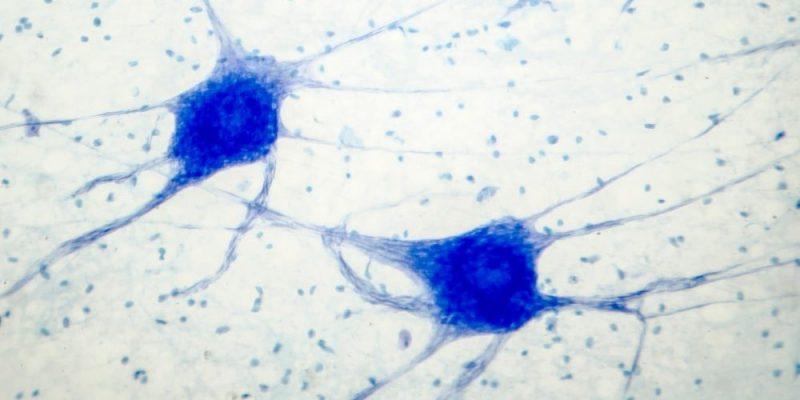 tejidos del cuerpo nervioso