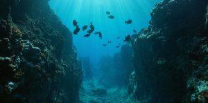 fosa oceanica