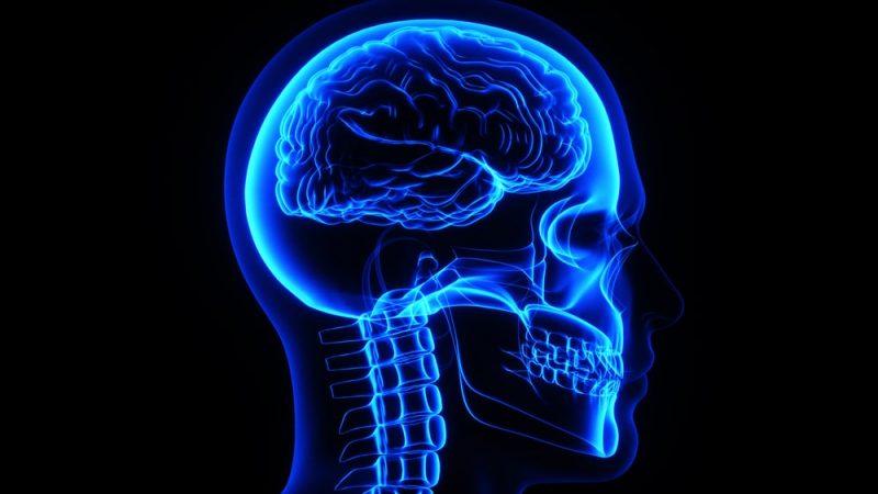 partes del cuerpo humano cabeza