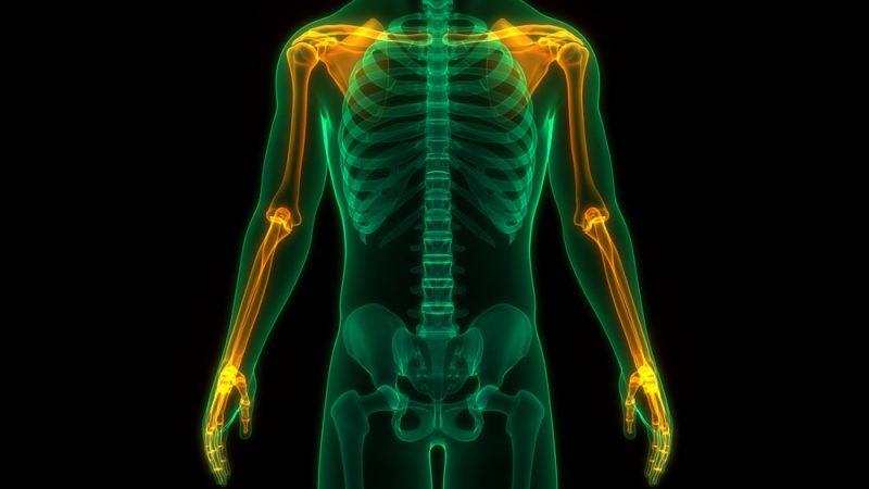 partes del cuerpo humano extremidades