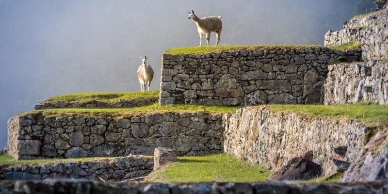 Primeras civilizaciones agrícolas inca andes sudamerica