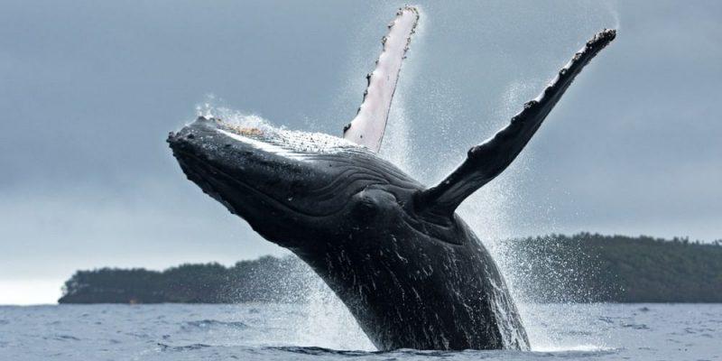 ballena donde viven migracion