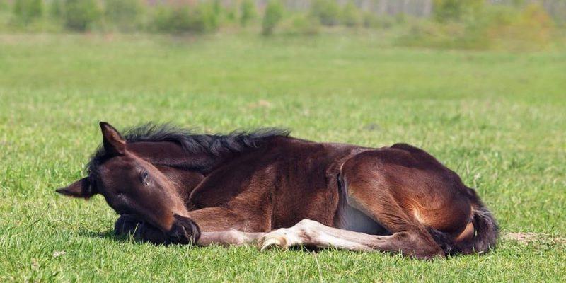 caballos caracteristicas