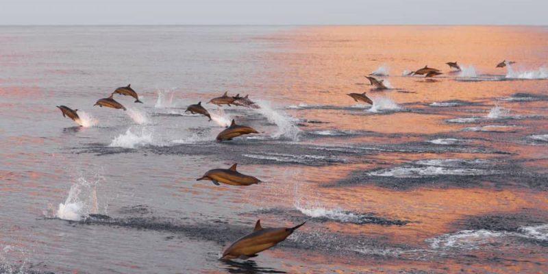 delfines caracteristicas