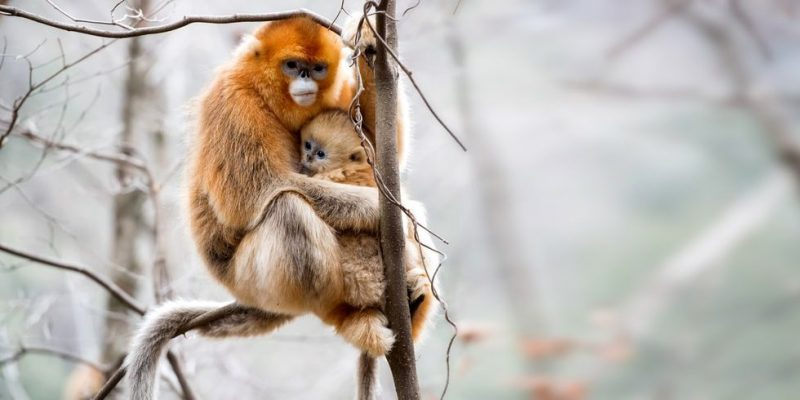 mono habitat donde vive