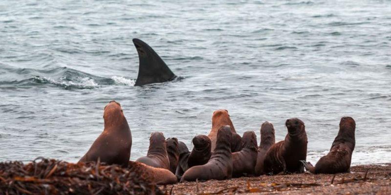 orca que comen alimentacion