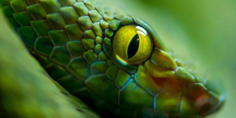 serpiente caracteristicas ojos