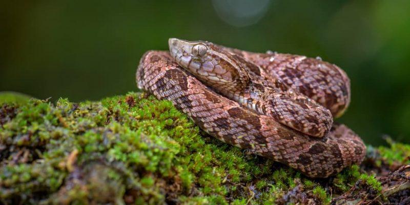 serpiente habitat donde vive